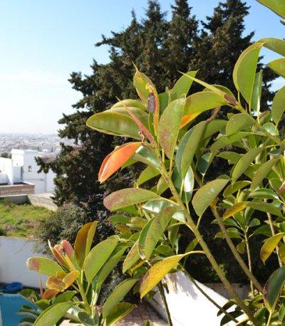 Pernottamento e prima colazione Dar Gammarth Tunis